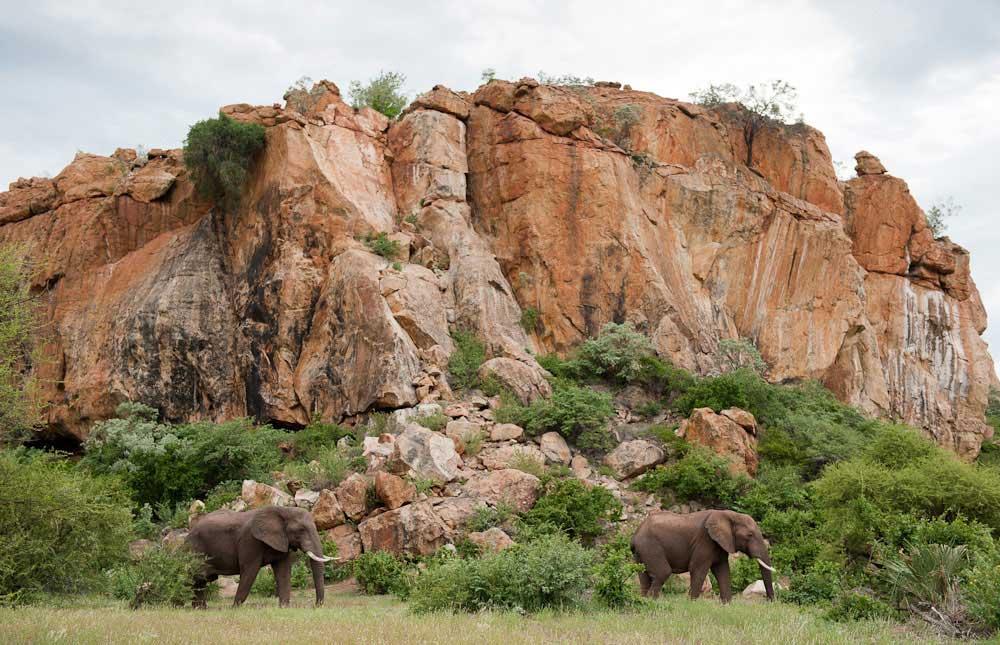 paesaggi del Mapungubwe national park in sudafrica