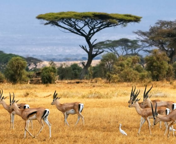 low_cost_safari_africa