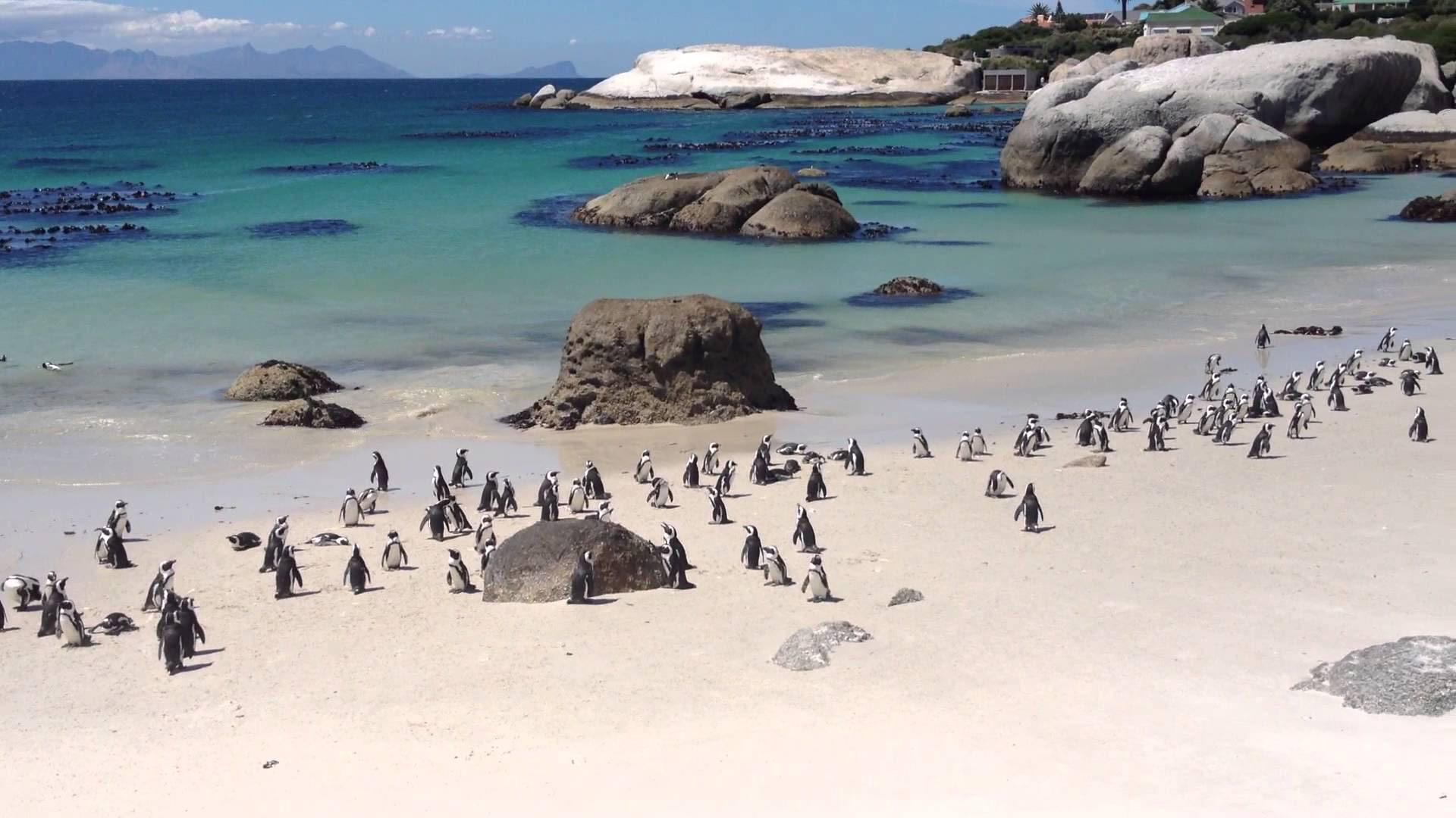la colonia di pinguini a boulders beach