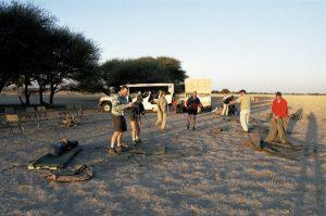 low-cost safari in botswana