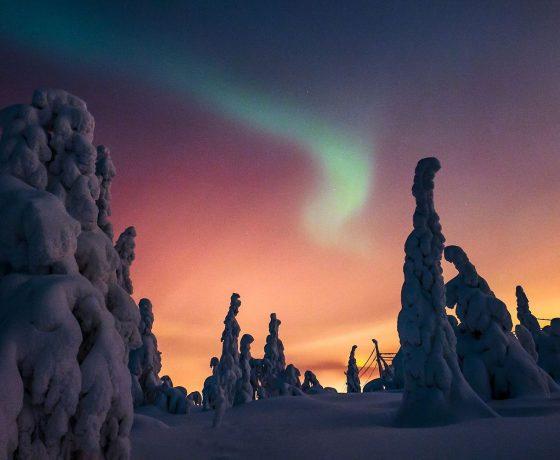 lo spettacolo dell'aurora boreale ammirato dalla foresta innevata di ruka-kuusamo nella finlandia settentrionale