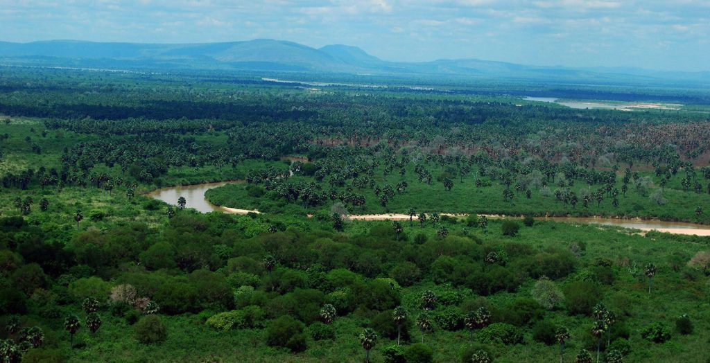 Vista dall'aereo della Selous Game Reserve. La vegetazione, nella stagione delle piogge, è verdissima.