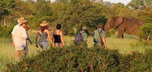 safari a piedi scortati da guide armate nel Kruger national park