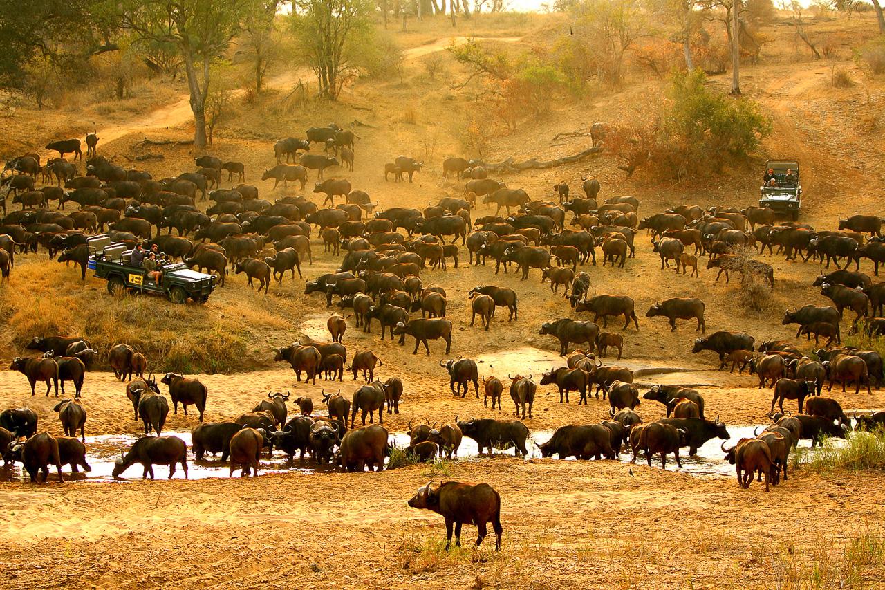 mala_mala_safari