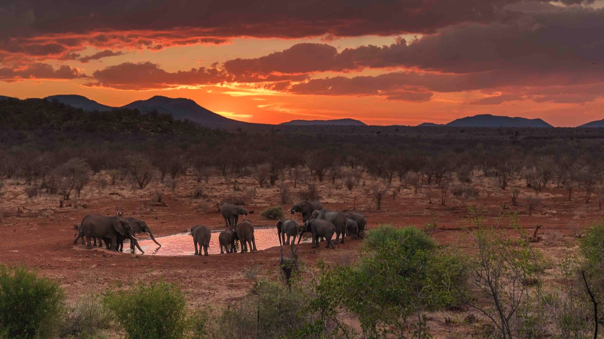 madikwe_elephants